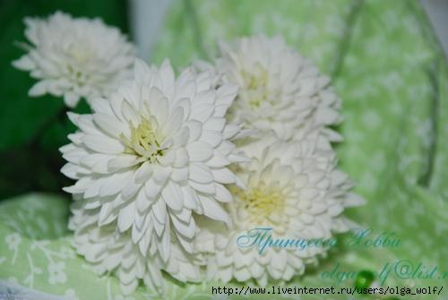 цветы (500x335, 111Kb)