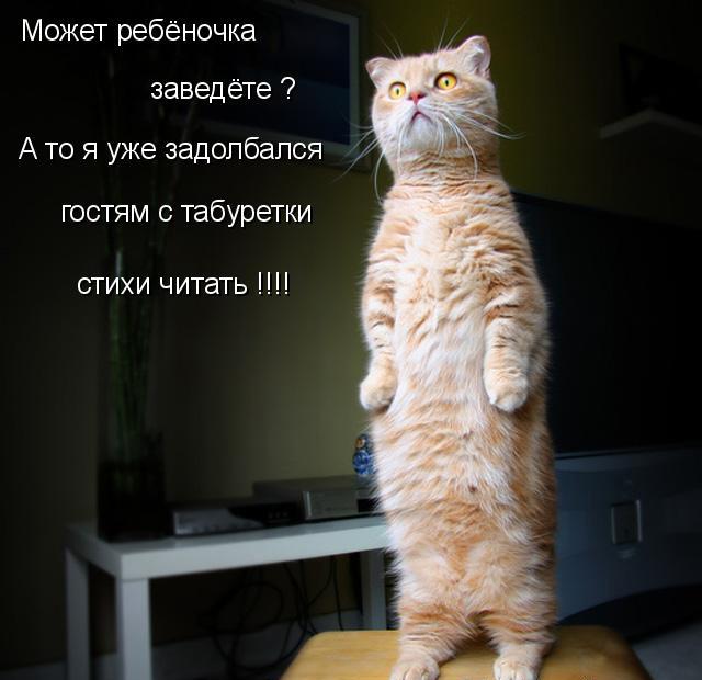 prikolnye-koty-i-sobaki-1 (640x620, 69Kb)