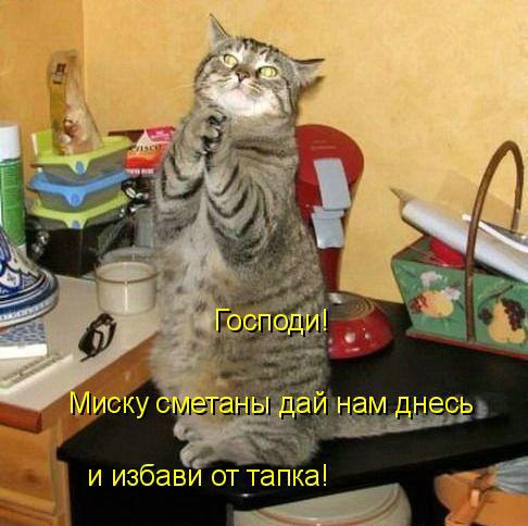 prikolnye-koty-i-sobaki-3 (486x484, 73Kb)