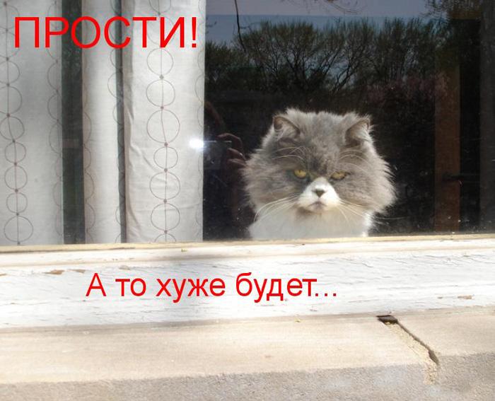prikolnye-koty-i-sobaki-5 (700x567, 128Kb)