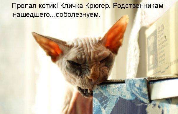 prikolnye-koty-i-sobaki-19 (604x386, 56Kb)