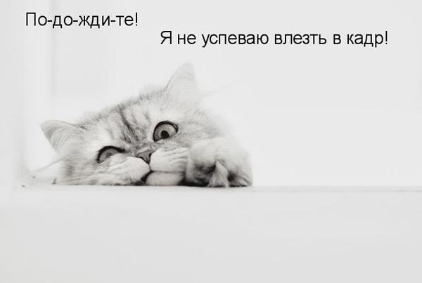 prikolnye-koty-i-sobaki-23 (600x403, 27Kb)