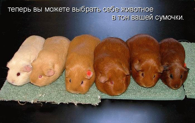prikolnye-koty-i-sobaki-35 (650x412, 106Kb)