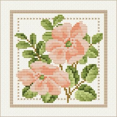June - Wild Rose.