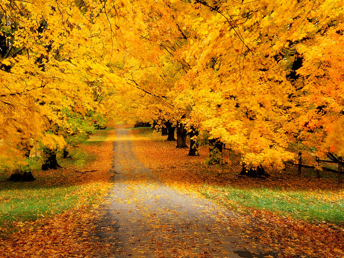 wallpaper_autumn008 (700x525, 322Kb)