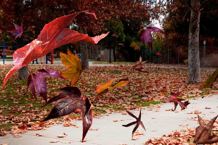 1-autumn-wind-richard-gordon-1 (700x464, 57Kb)