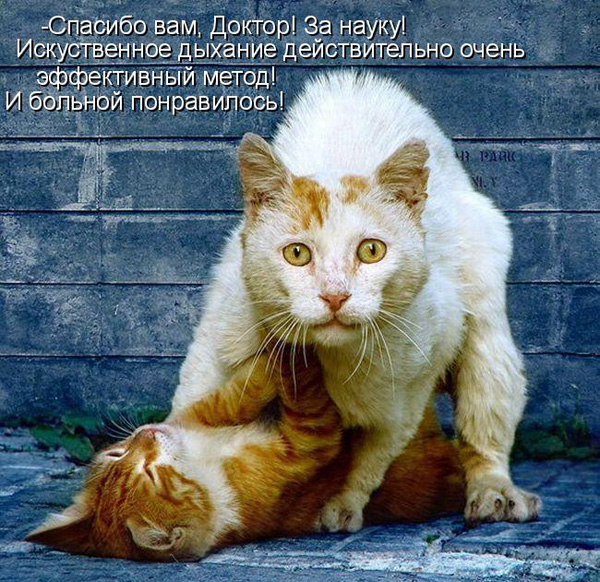 prikolnye-koty-i-sobaki-44 (600x582, 189Kb)