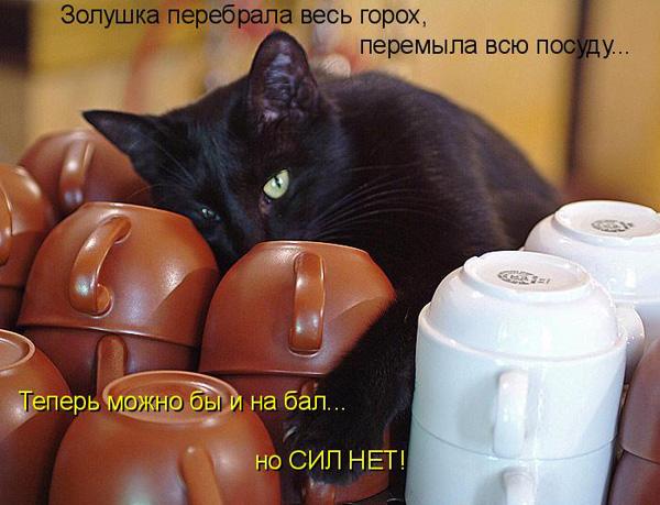 prikolnye-koty-i-sobaki-49 (600x459, 109Kb)