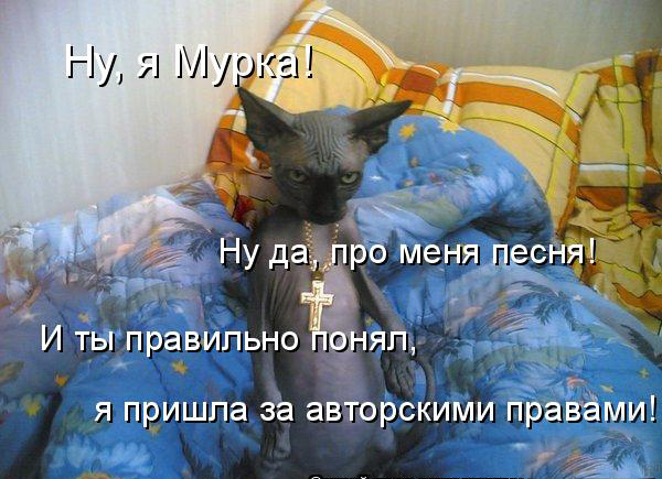 prikolnye-koty-i-sobaki-92 (600x435, 96Kb)