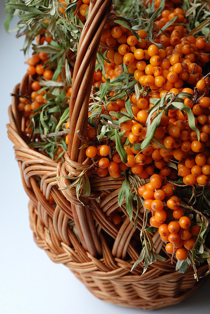 2838625539_b8ae25bcda Sea-buckthorn p.2_M (428x640, 143Kb)