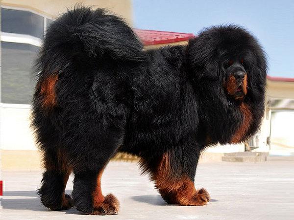 собака1 (600x450, 58Kb)