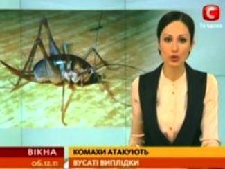 Китайские мутанты напали на киевлян (325x244, 15Kb)