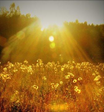 solnce-svet (336x364, 30Kb)