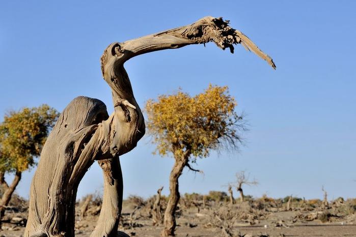 Геологический парк пустыни Алашань 12344