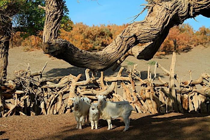 Геологический парк пустыни Алашань 98356
