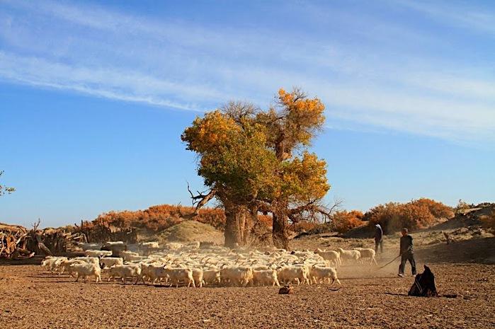 Геологический парк пустыни Алашань 26847