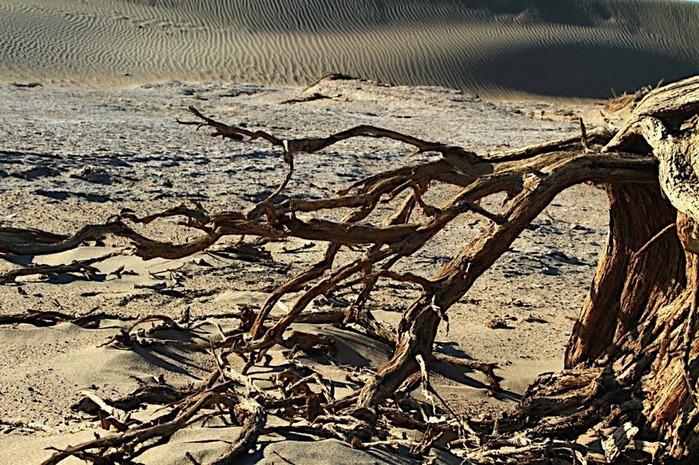 Геологический парк пустыни Алашань 64456
