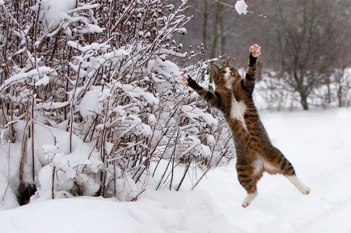 летящий зимной кот (700x465, 235Kb)