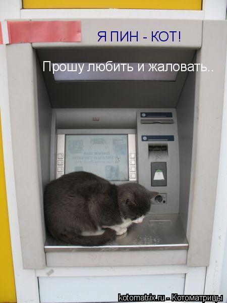 котоматрица кот (450x600, 31Kb)