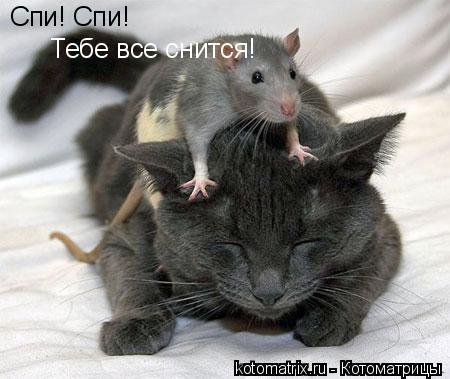 котоматрица мышь (450x379, 30Kb)