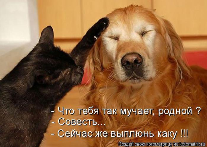 http://img0.liveinternet.ru/images/attach/c/4/81/121/81121620_large_kotomatrica_sovest.jpg