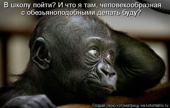 http://img0.liveinternet.ru/images/attach/c/4/81/121/81121622_kotomatrica_shkola.jpg