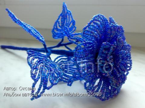 biser.info_35696_roza-zima-3_1264004465.previewсинроза3 (479x359, 32Kb)