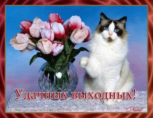 Удачных выходных кошка (500x384, 41Kb)