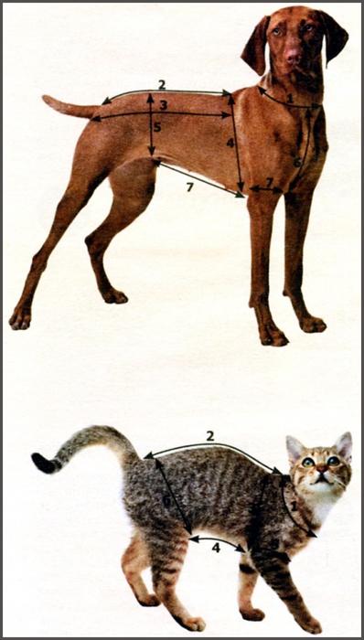 <вязание для собак - Самое