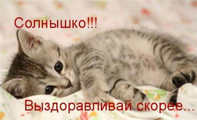 http://img0.liveinternet.ru/images/attach/c/4/81/169/81169308_vuyzdoravlivay.jpg