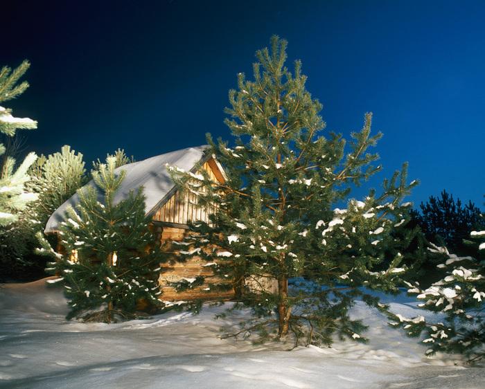 домик в деревне сосны (700x562, 219Kb)