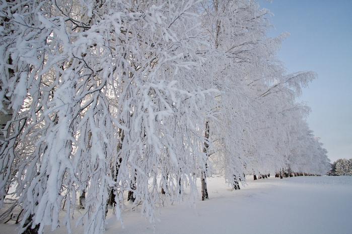 зимняя природа (700x466, 363Kb)