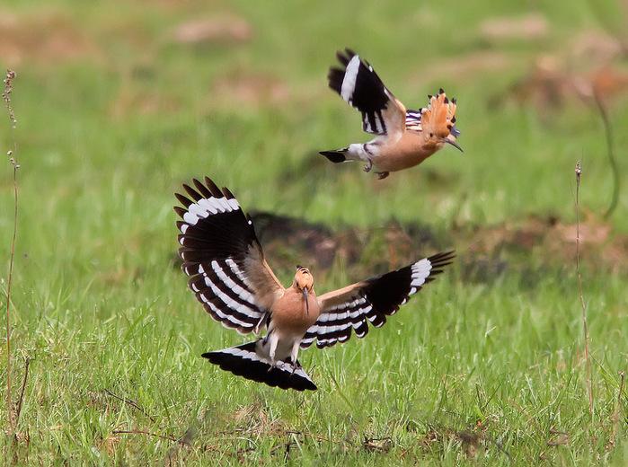 красивые птички (700x520, 169Kb)