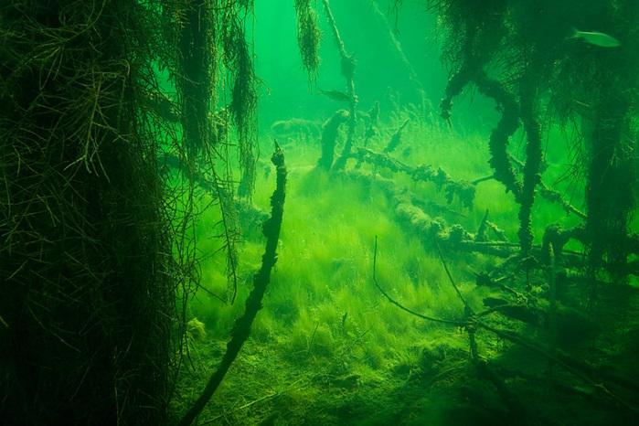 подводный мир (700x466, 171Kb)
