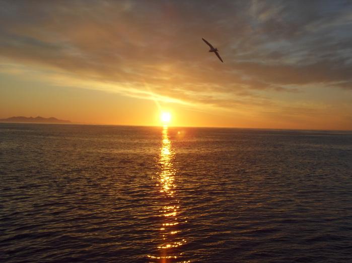 чайка над морем (700x524, 113Kb)