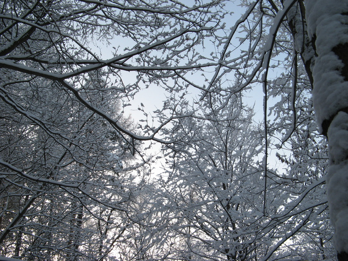 снежный узор (700x525, 296Kb)
