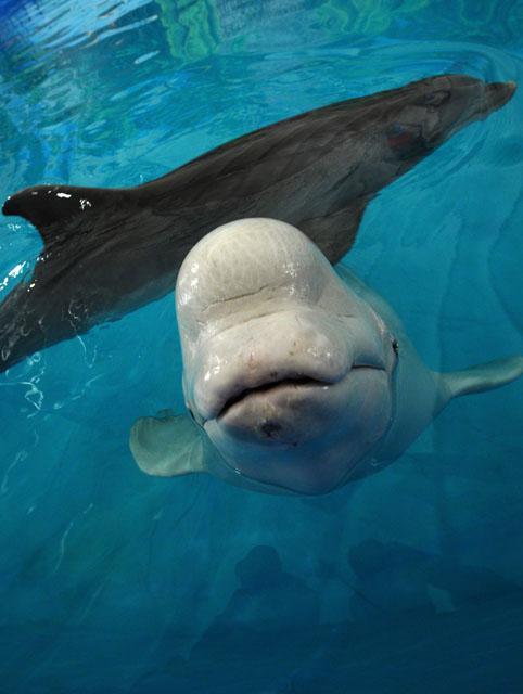 дельфин (482x640, 33Kb)