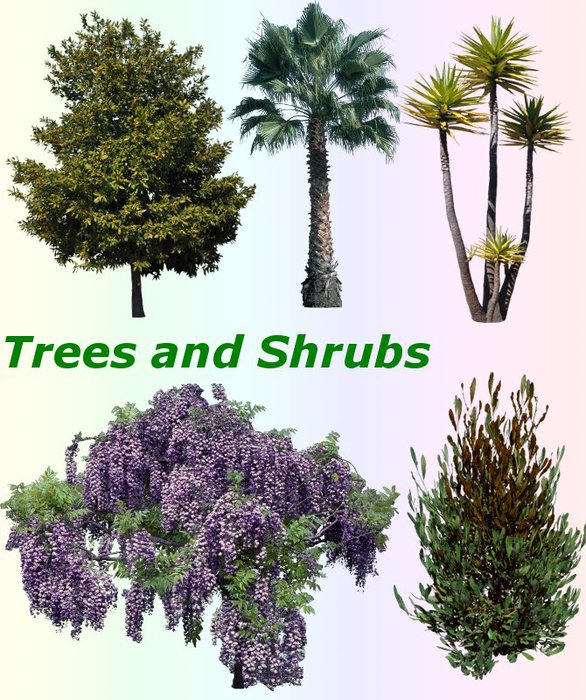 3291761_01Trees_and_Shrubs (586x700, 124Kb)