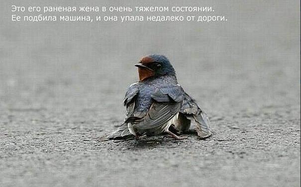 1324478175_Snimok_yekrana_20111221_v_233309 (605x376, 245Kb)