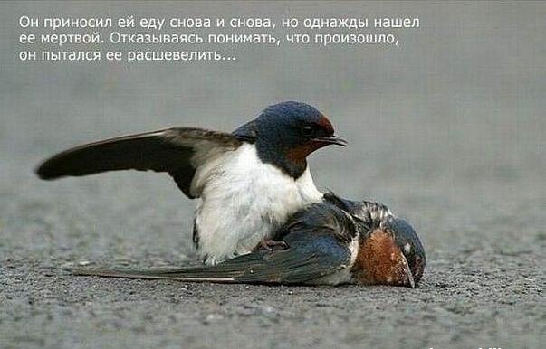 1324478255_Snimok_yekrana_20111221_v_233351 (603x386, 314Kb)