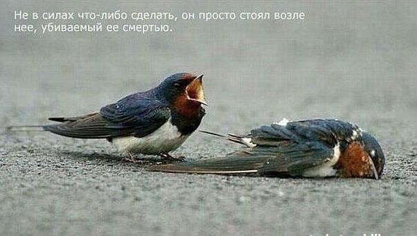 1324478326_Snimok_yekrana_20111221_v_233435 (602x341, 278Kb)