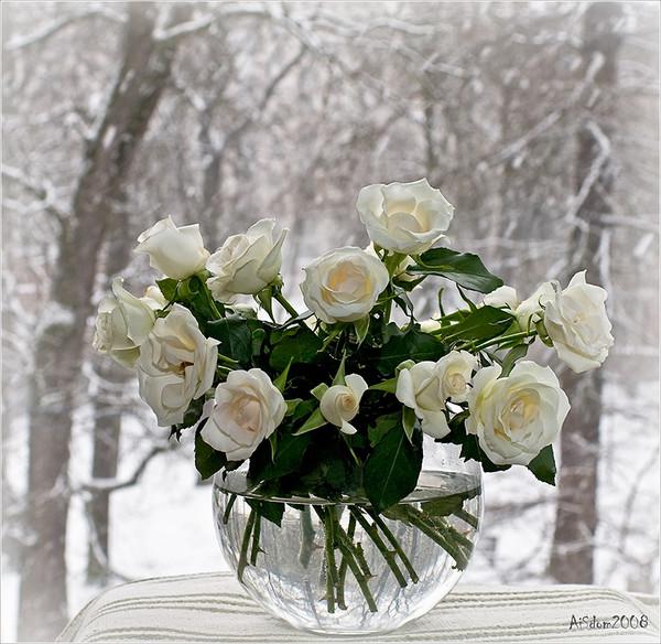 14 бел розы 59762 (600x584, 122Kb)