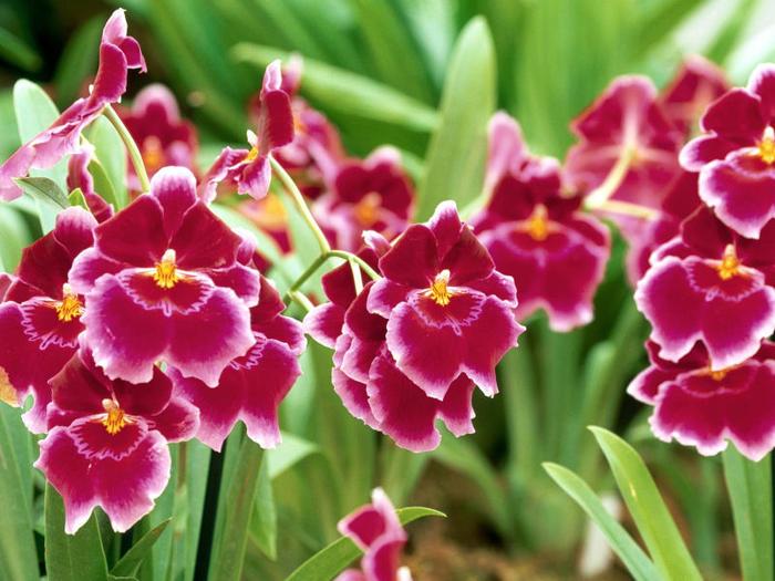flowers 2 (700x525, 77Kb)