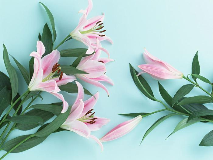flowers 10 (700x525, 52Kb)