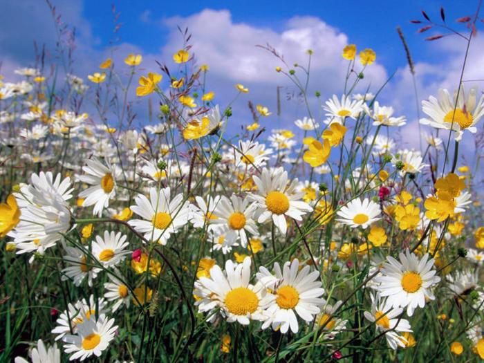 flowers 33 (700x525, 106Kb)