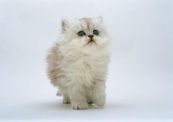 3571750_1253727379_1253686025_1253622643_16_kittens (600x425, 15Kb)
