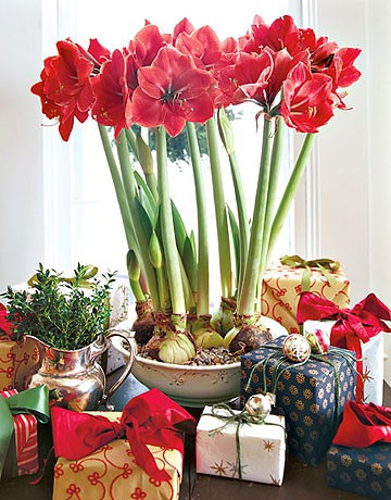 home-flowers-in-new-year-decorating3-1 (360x460, 70Kb)