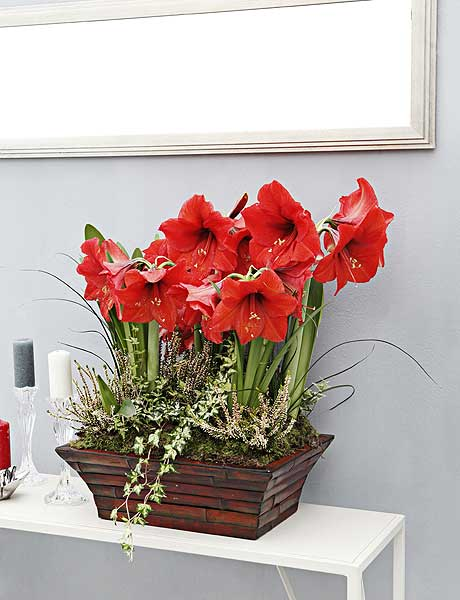 home-flowers-in-new-year-decorating3-3 (460x600, 37Kb)