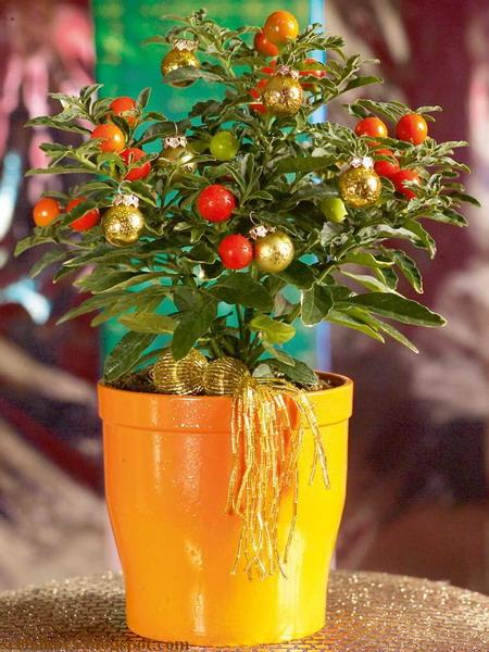 Комнатные растения в новогоднем