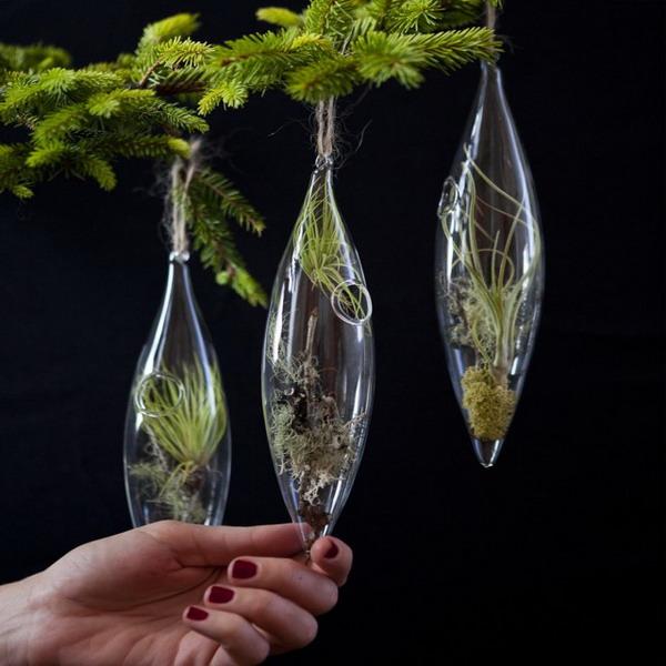 Конечно хвойные комнатные растения